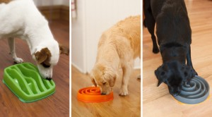 slo-bowl_slow_feeder_for_dogs_Kyjen_03