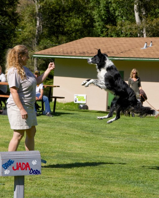 2014-Paws-for-a-cause-trail-bc