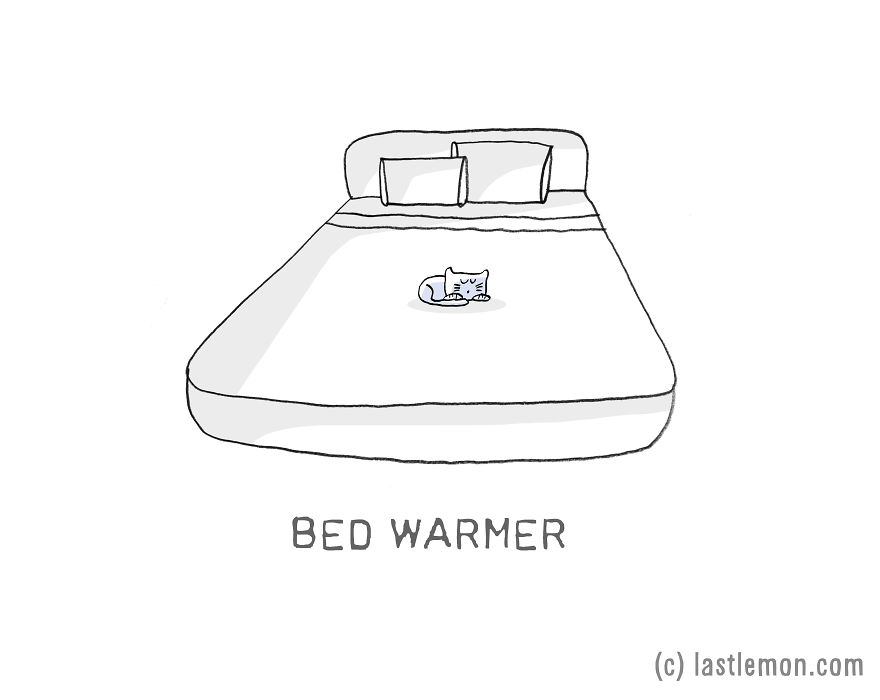 Lastlemon.com Cat Job: Bed Warmer