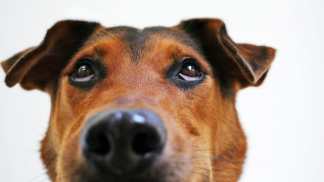 Your dog remembers more than you think