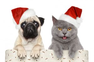 Barks and Recreation in Trail, BC christmas-pug-cat