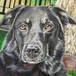 Pet Portrait Painting - Shanna Finished Detail