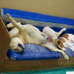 Snooze time for Rosco and Ruby.