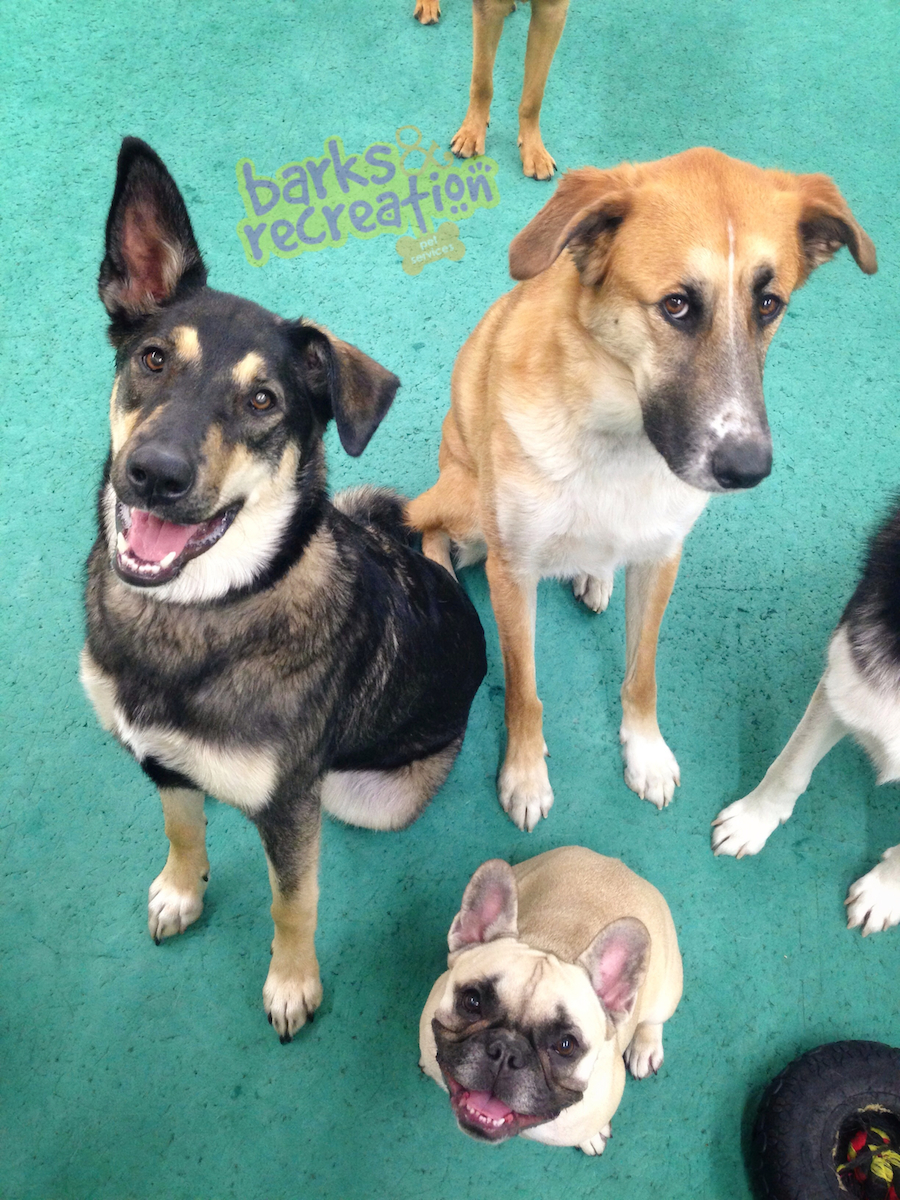 Una, Sophie and Buddy on Buddy's last day of daycare :(