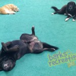 Bear, Marley, and Hutch