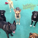 Bear, Sophie, Marley, Lily, Hutch and Aries head