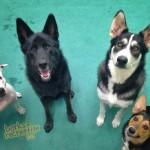 Fabulous Four: Sadie, Dax, Bailey, and Maddie