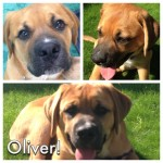 New puppy Oliver