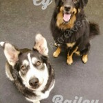 Cy and Bailey