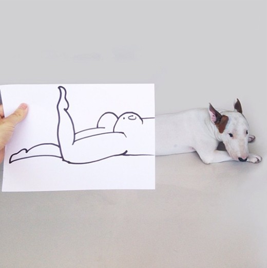 Bull Terrier Photos by Rafael Mantessos