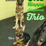Happy Shepherd Trio