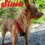 Stuie