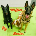 Waffles, Py, and Dexter