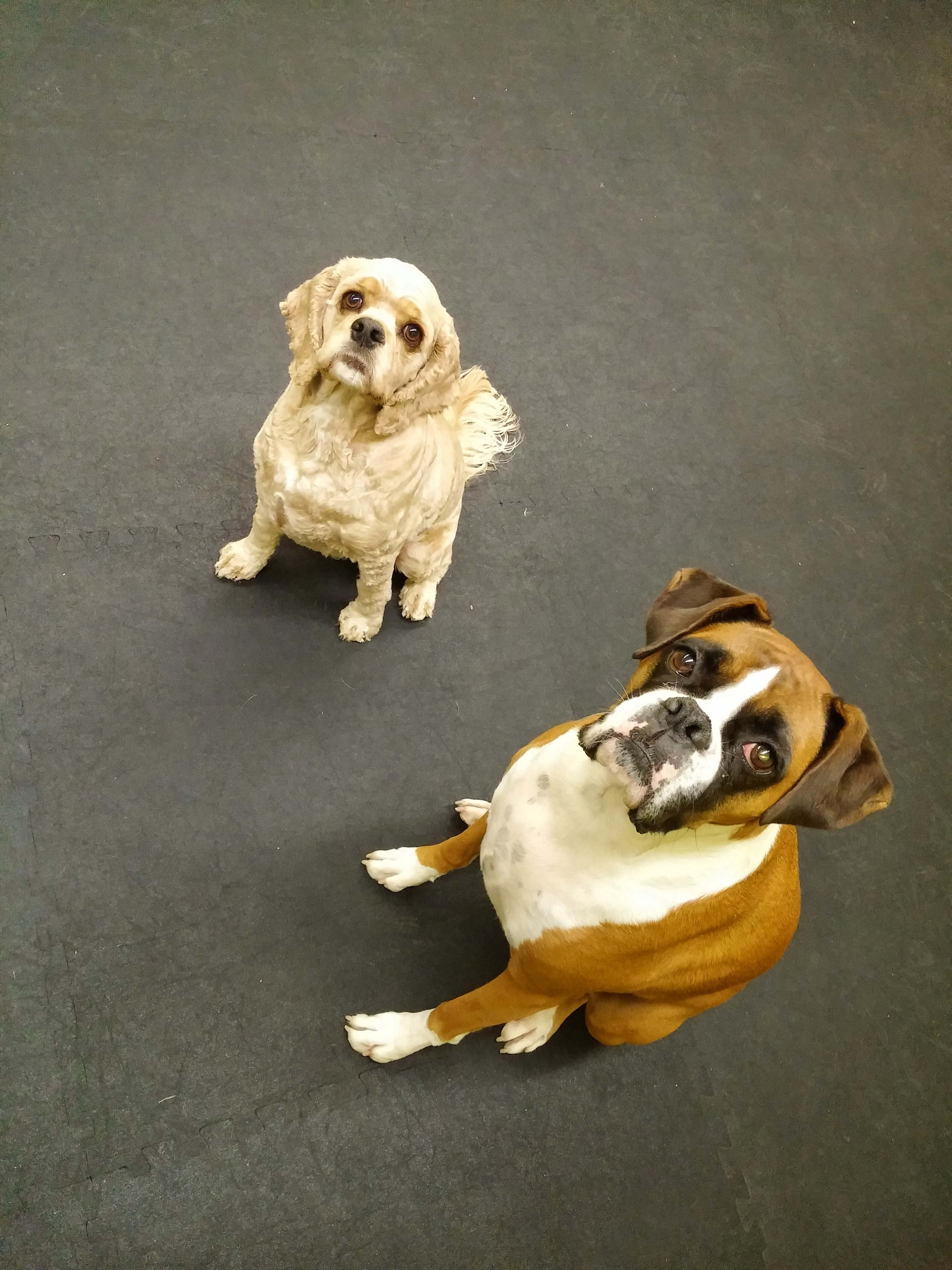 Daycare Dogs - Oliver and Aries