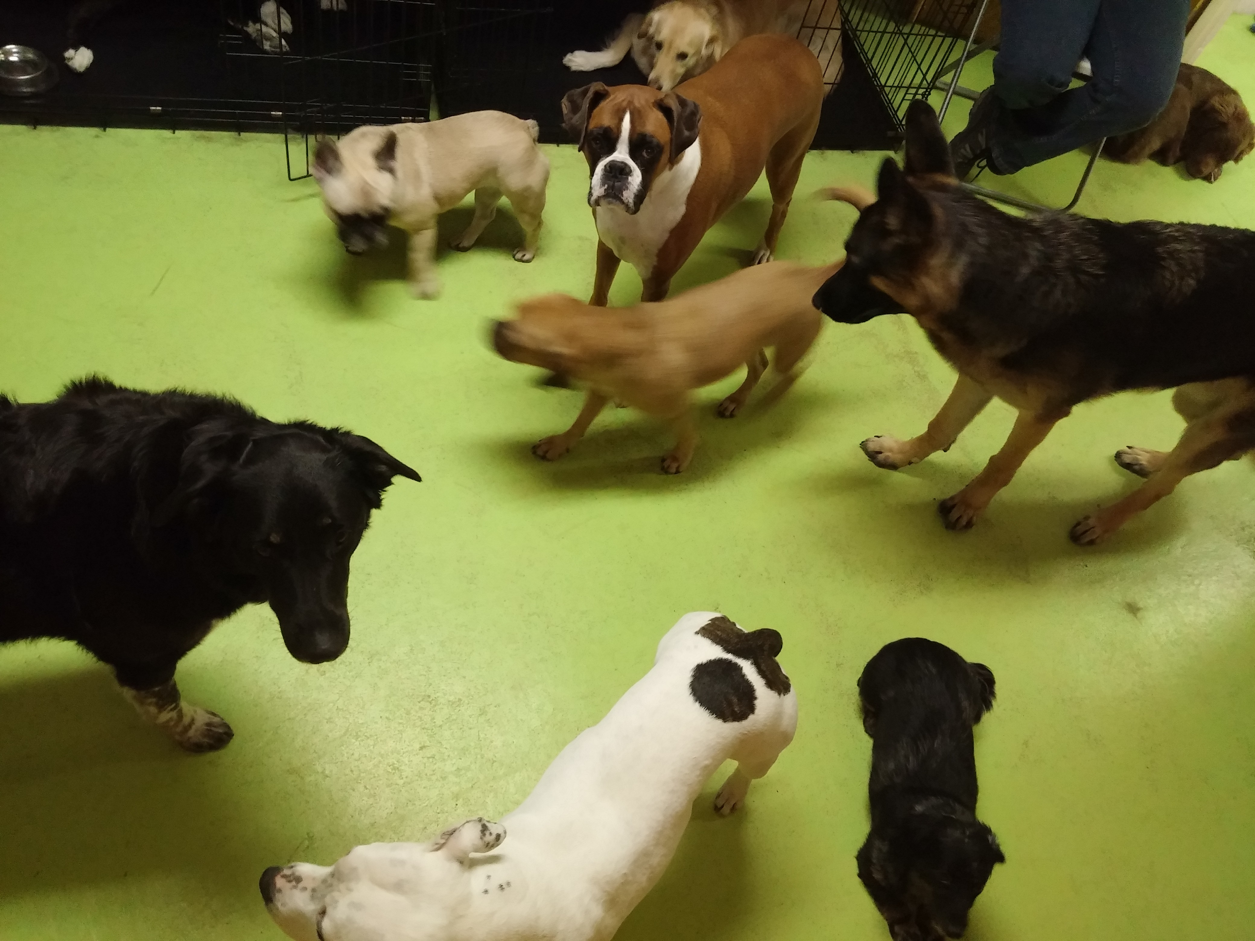Daycare Dogs - A Whole Gaggle