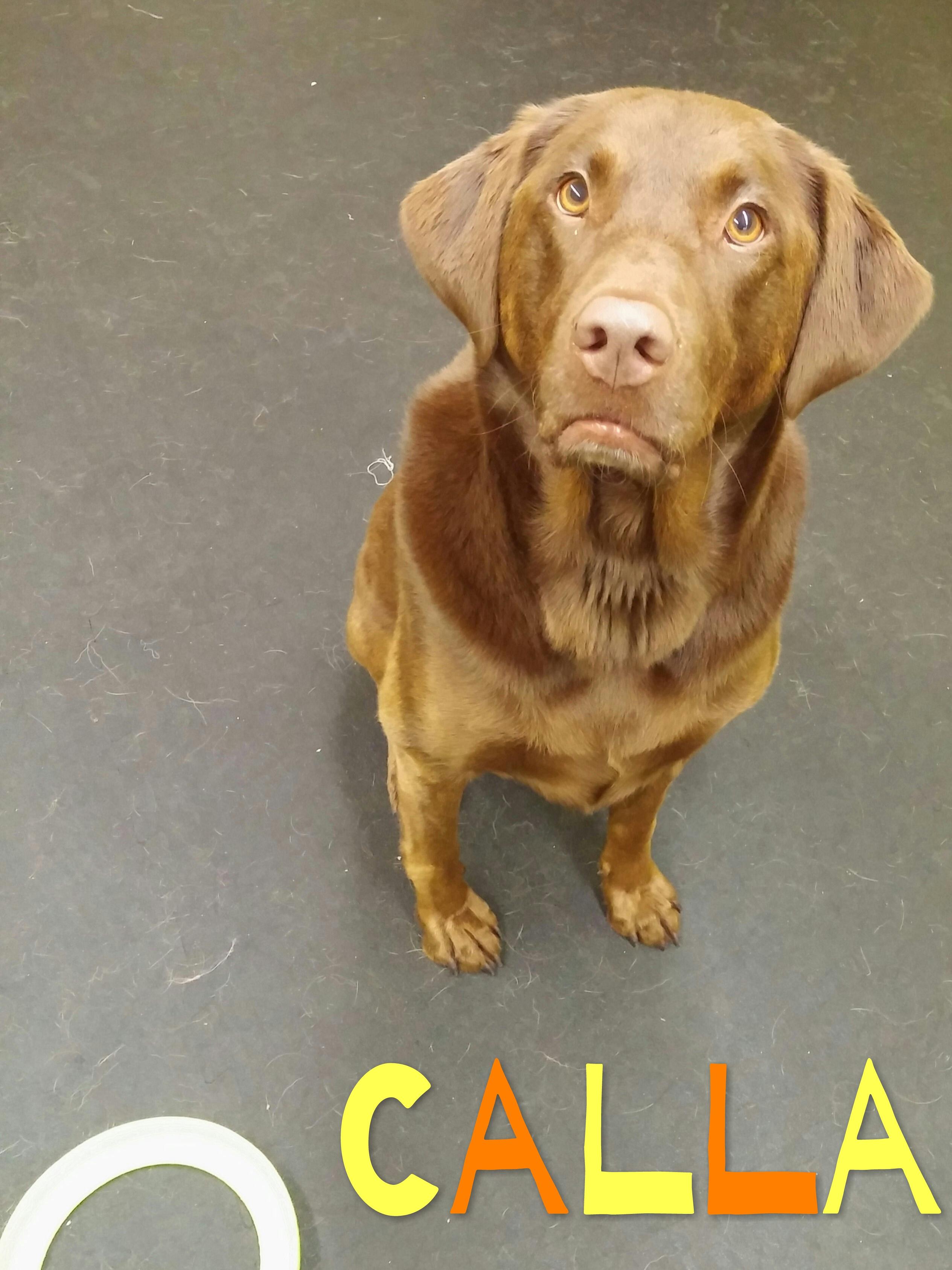 Daycare Dogs - Calla