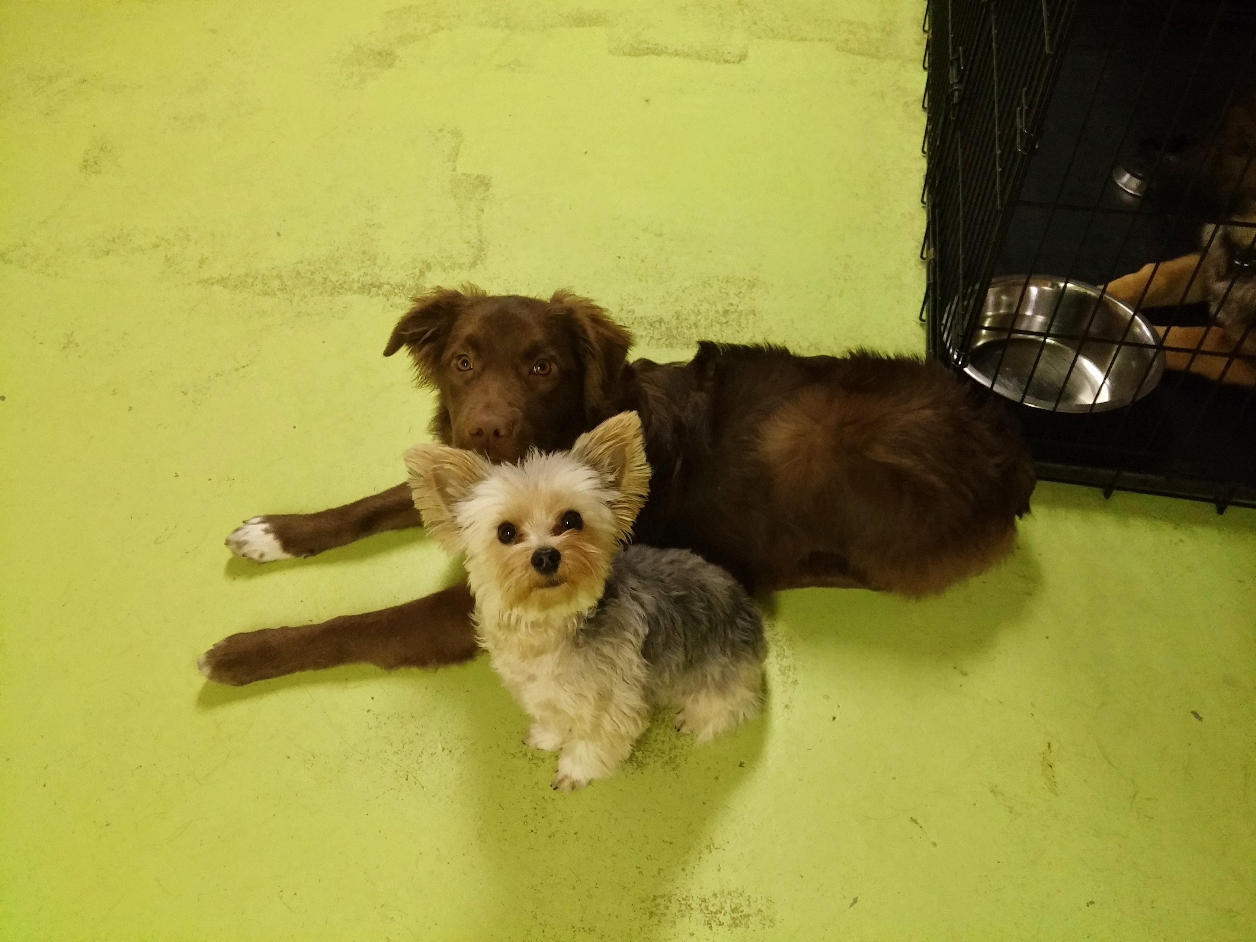 Daycare Dogs - Charlie and Brew