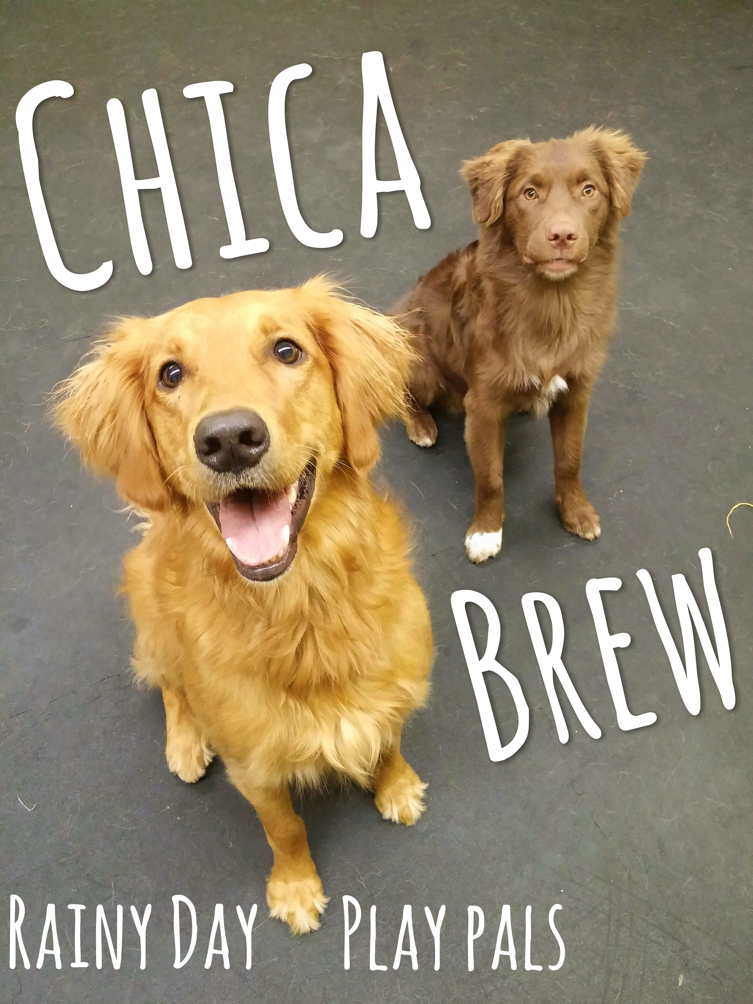 Daycare Dogs - Chica and Brew