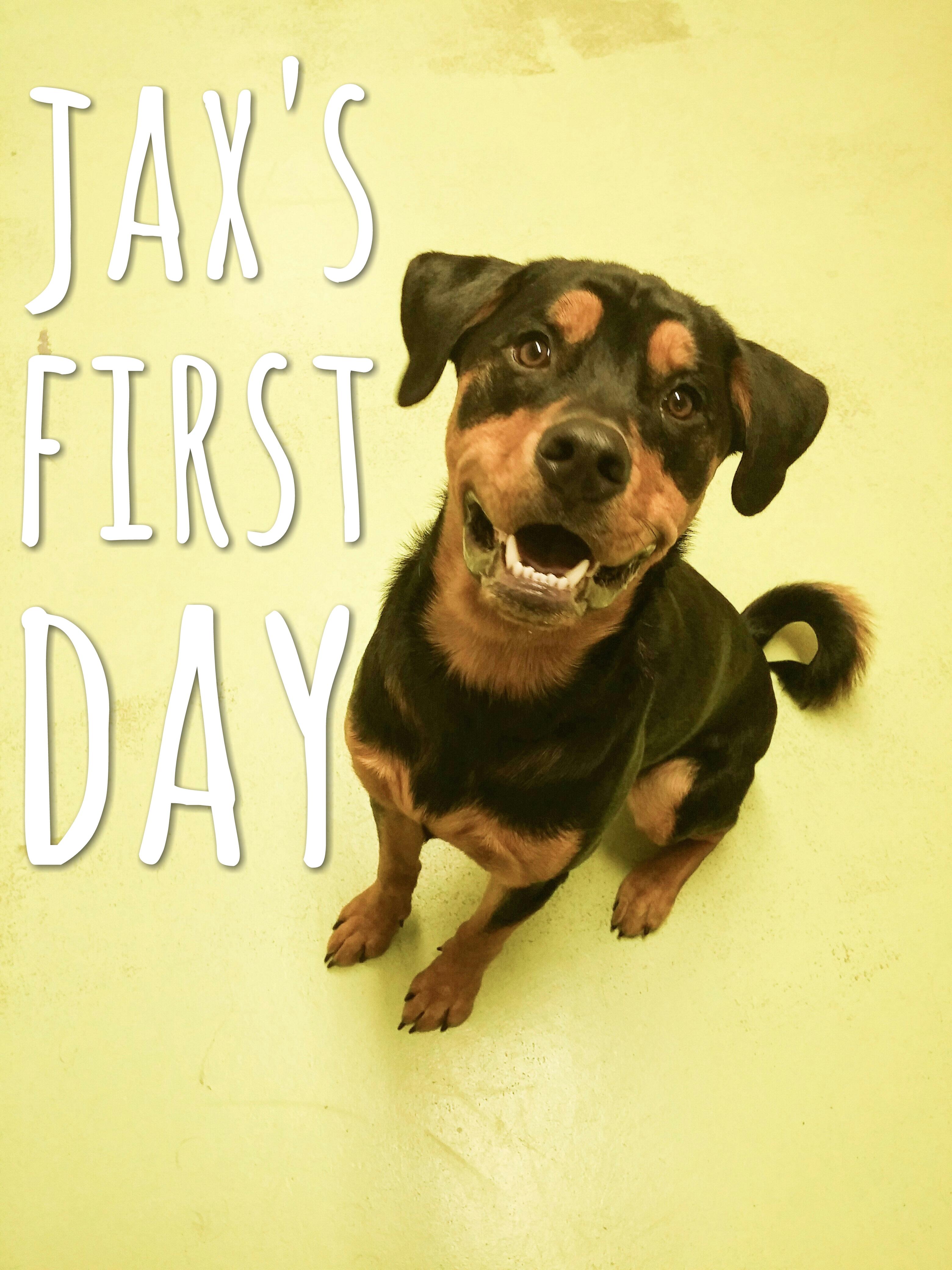 Daycare Dogs - Jax