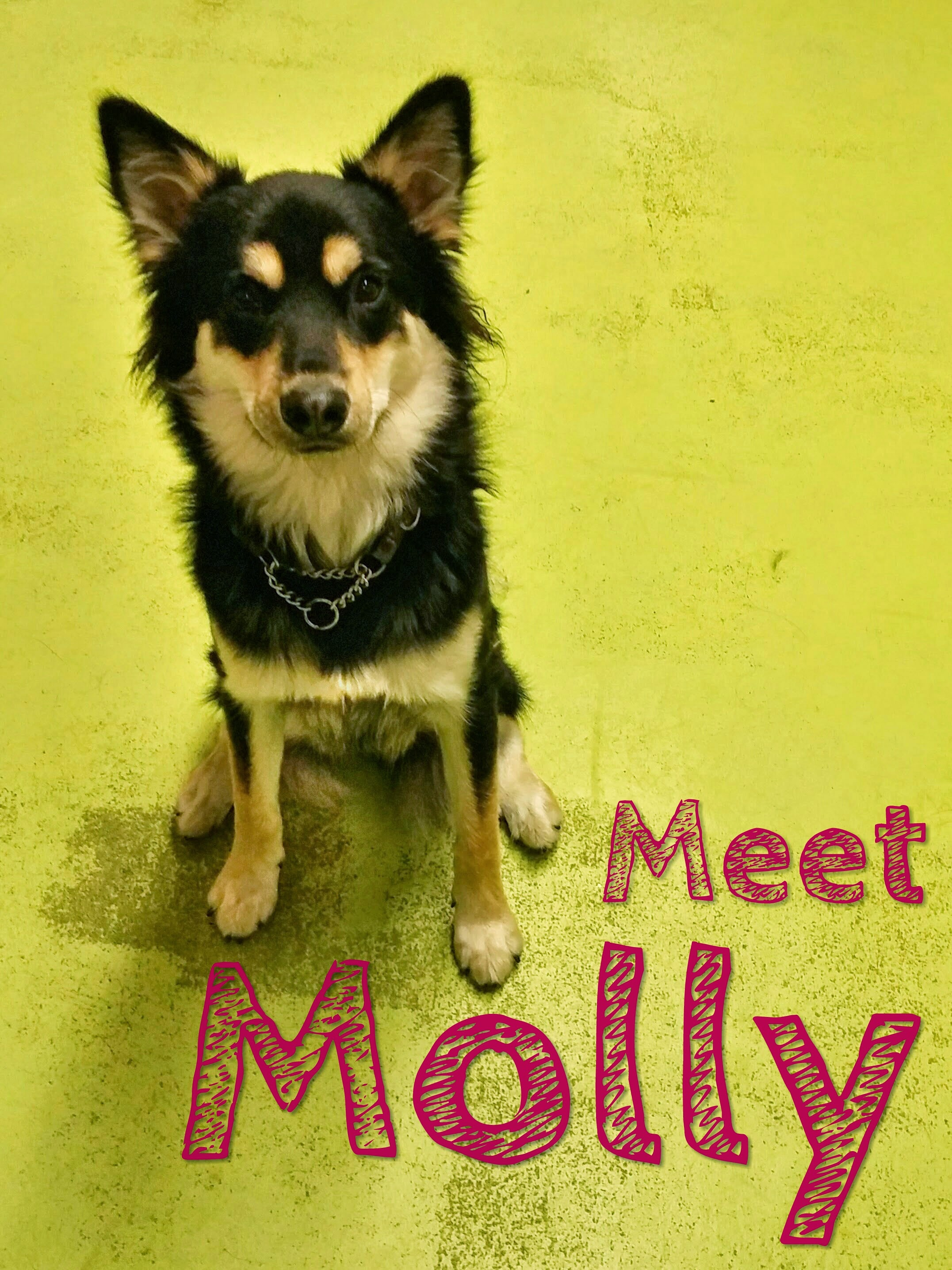 Daycare Dogs - Molly
