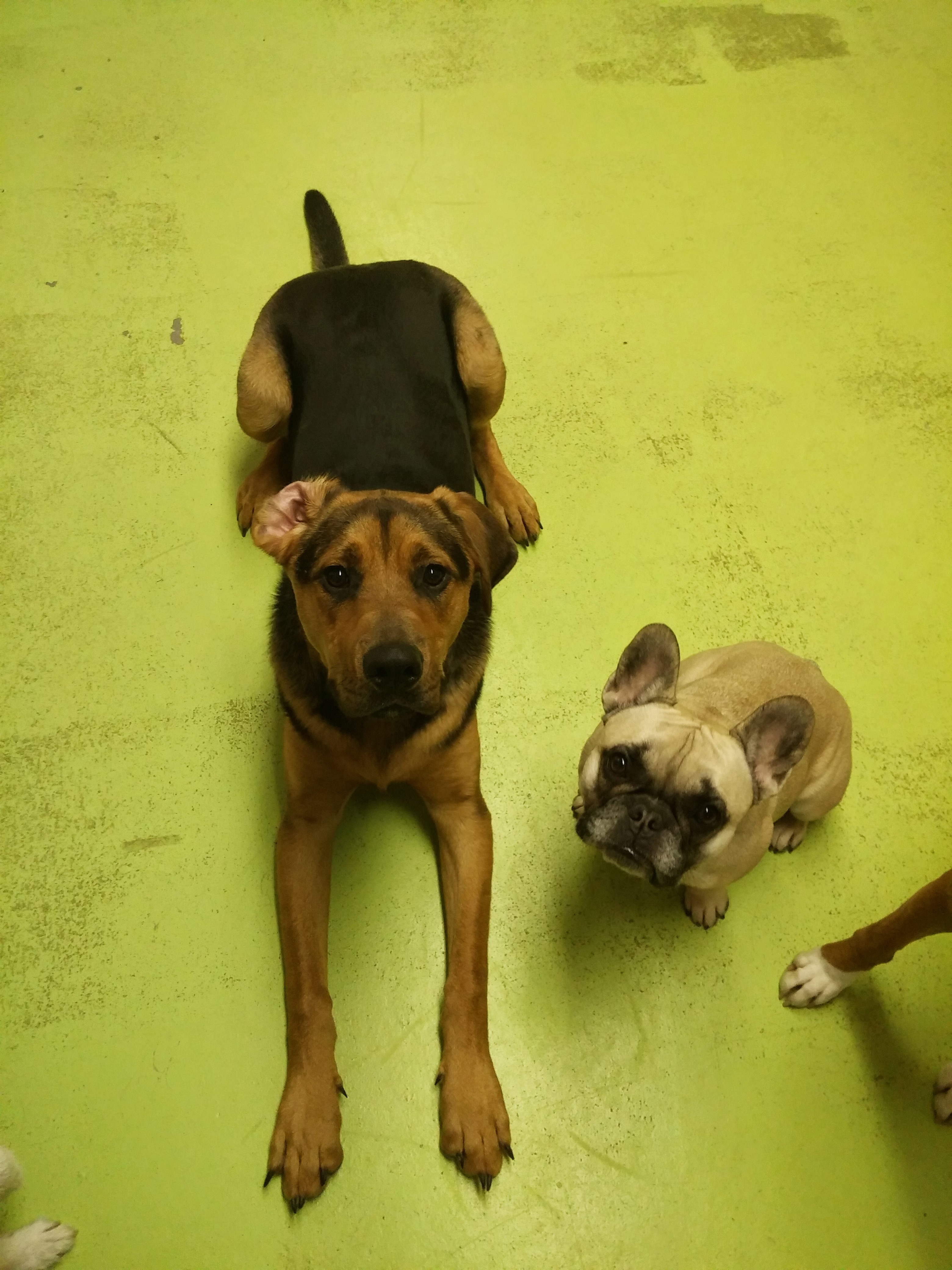 Daycare Dogs - Toby and Sophie