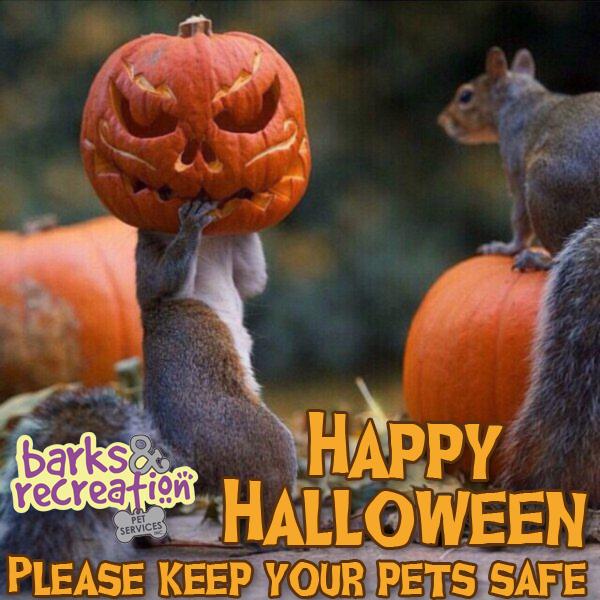 Happy Halloween Squirrels