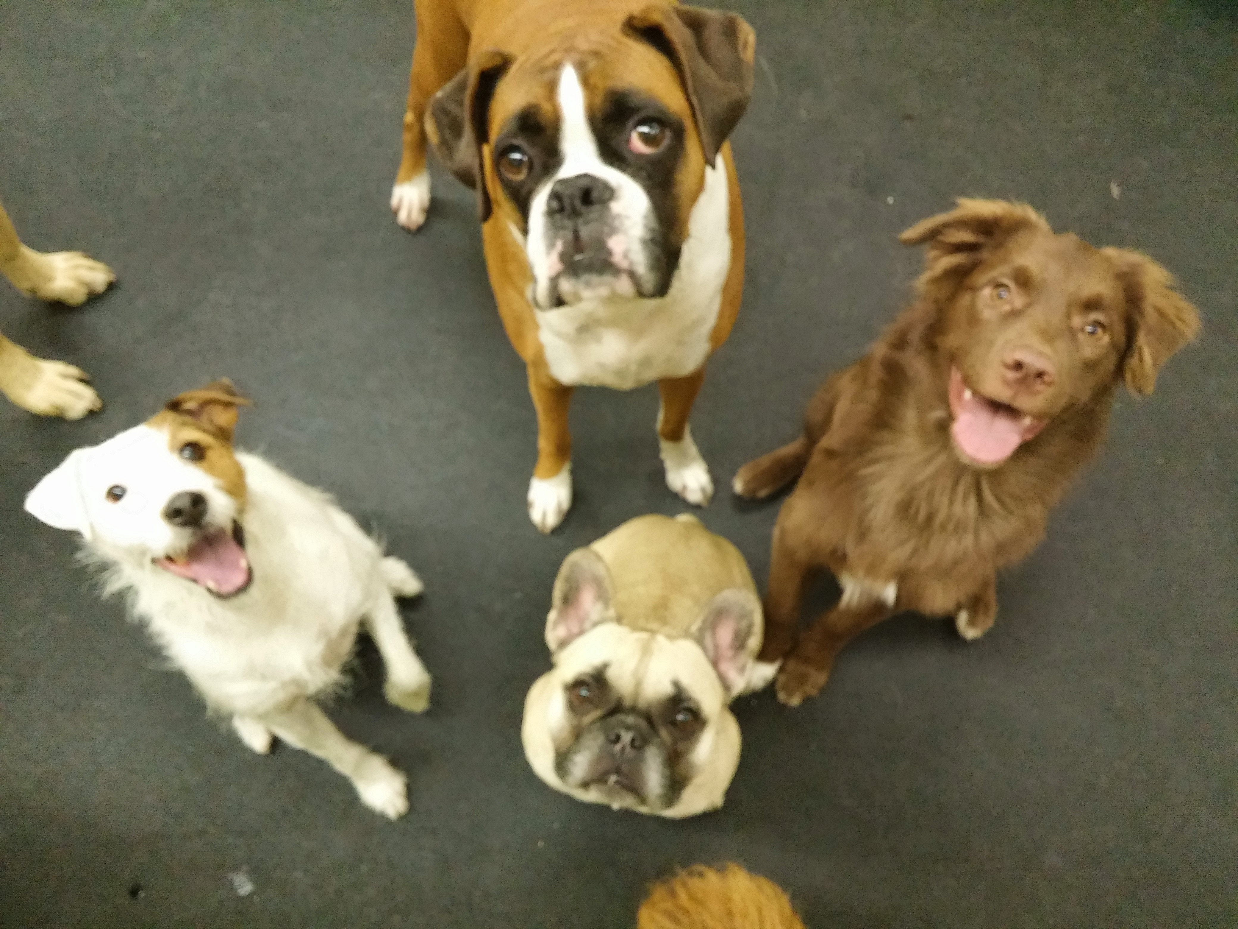 October Daycare Dogs