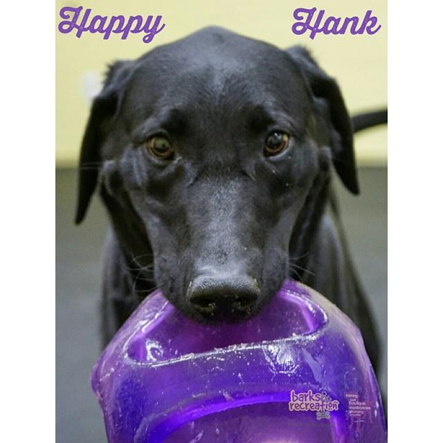 Barks and Recreation Instagram Happy Hank