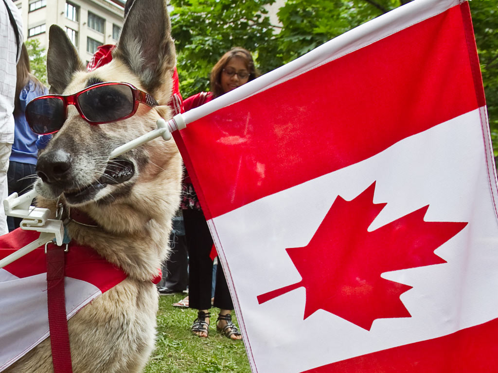 Barks and Recreation Closed Canada Day