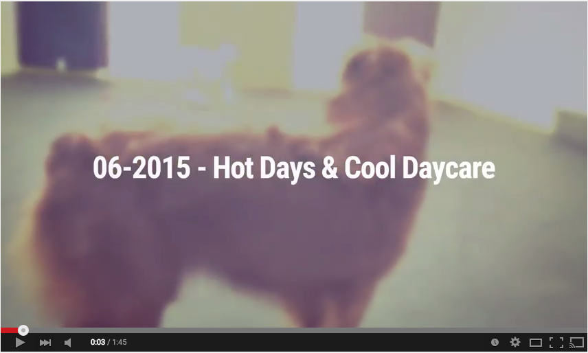 Video Barks and Recreation Hot Days and Cool Daycare
