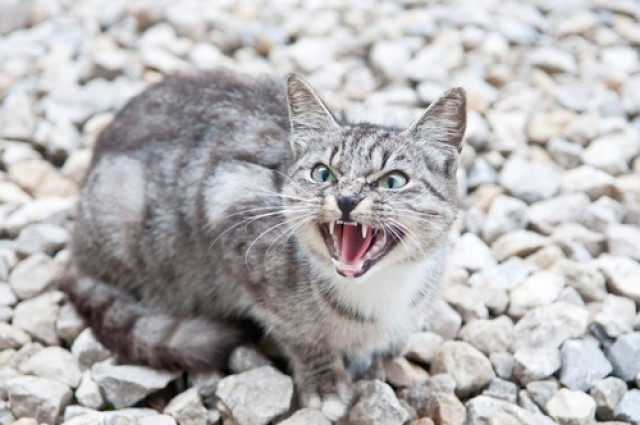 Cat's aggression linked to colour