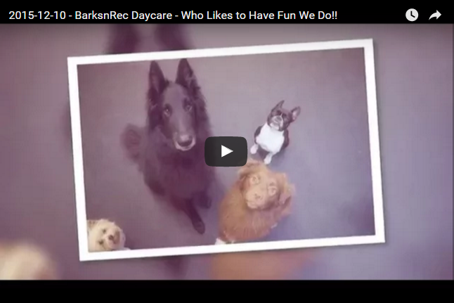 [Video] 2015-12-10 – BarksnRec Daycare – Who Likes to Have Fun? We Do!!