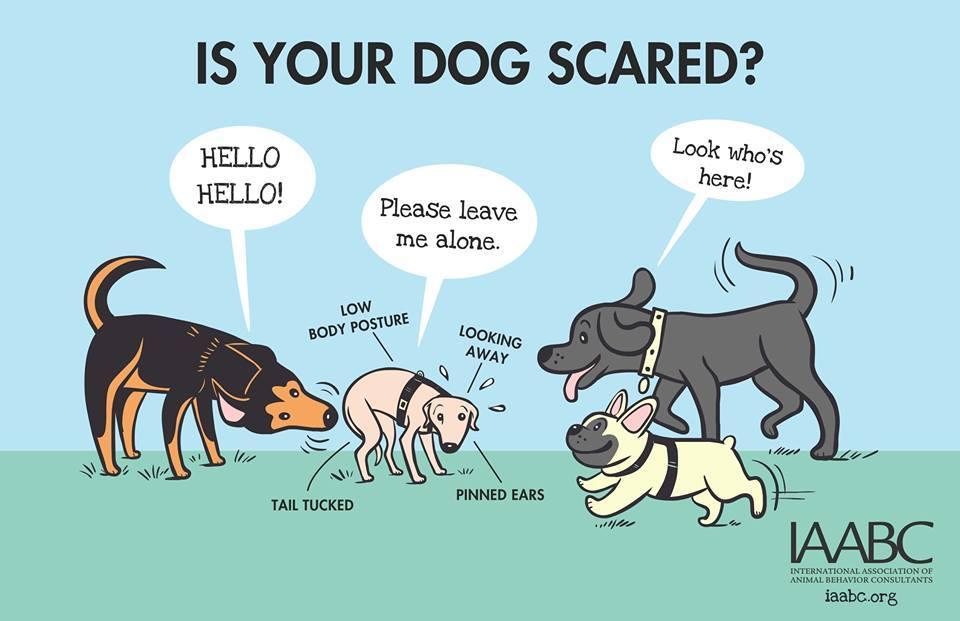 Barks and Recreation Trail BC IAABC Dog Park Safety