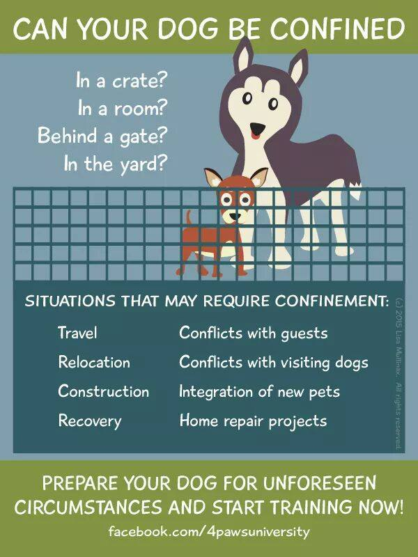 Can-your-dog-be-confined
