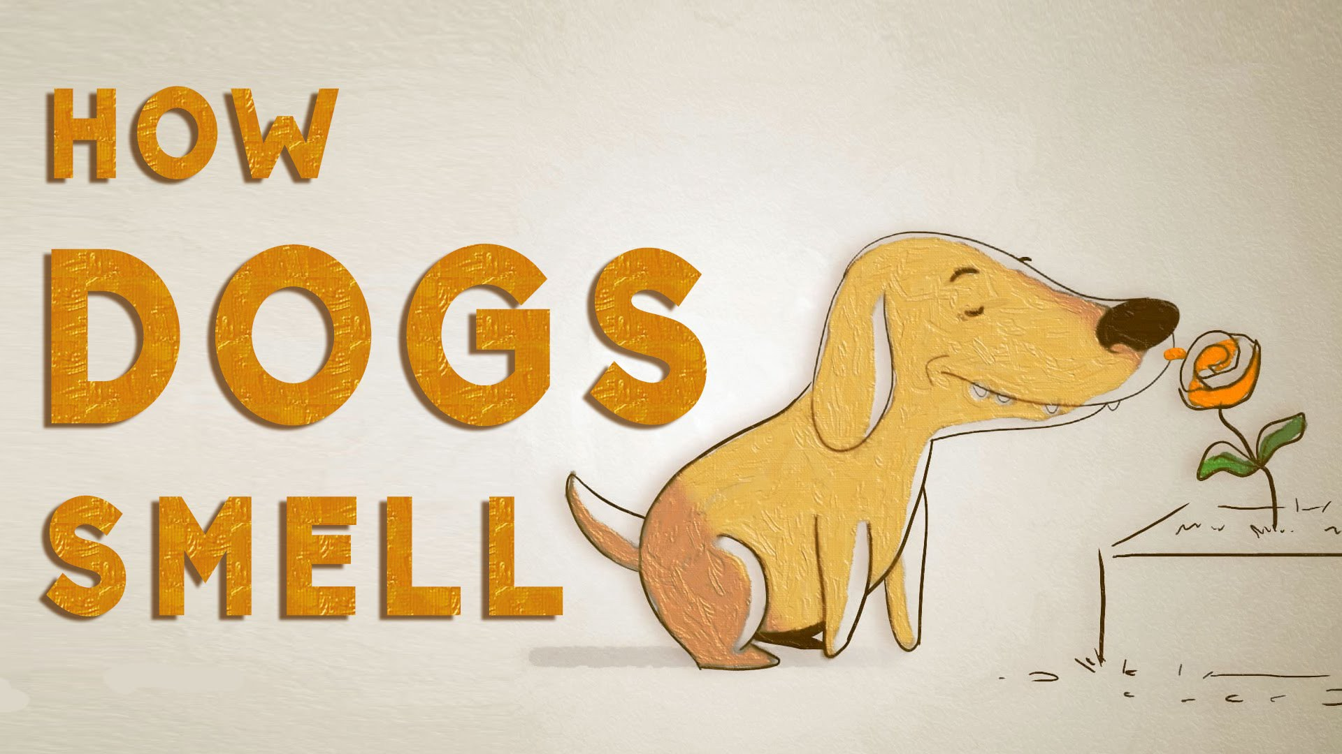 Barks-and-Recreation-Trail-BC-Ted-Talks-How-Dogs-Smell