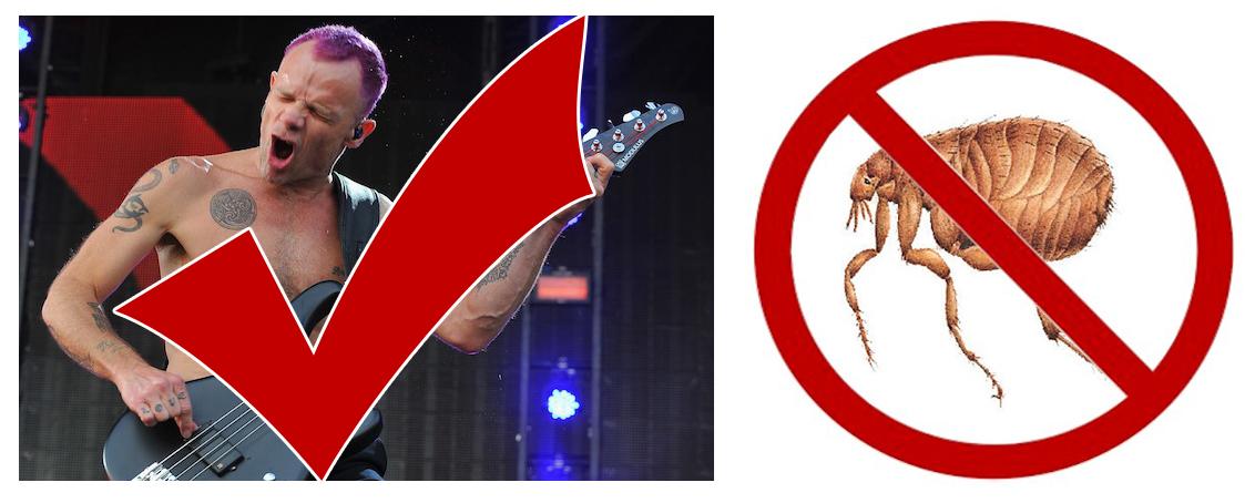 blog-flea-musician-good-flea-insect-bad