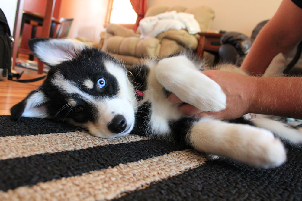 scratch reflex in dogs via Popular Science.