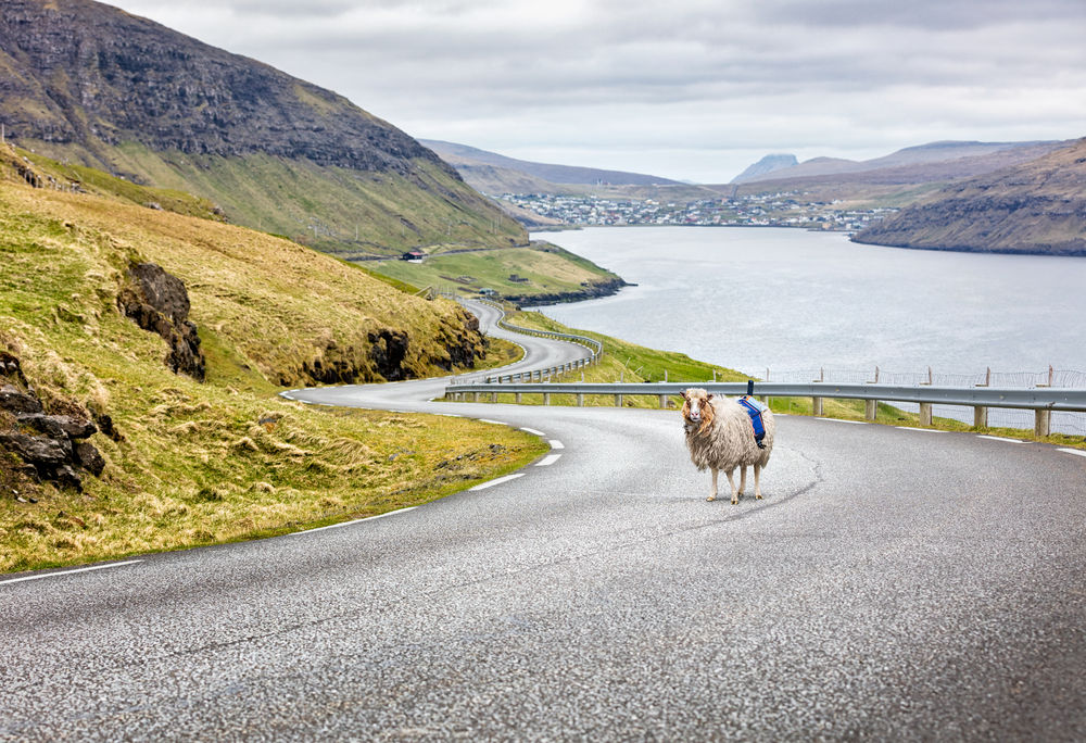 sheep-view-popsci