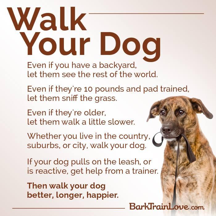 walk-your-dog-via-barktrainlove.com