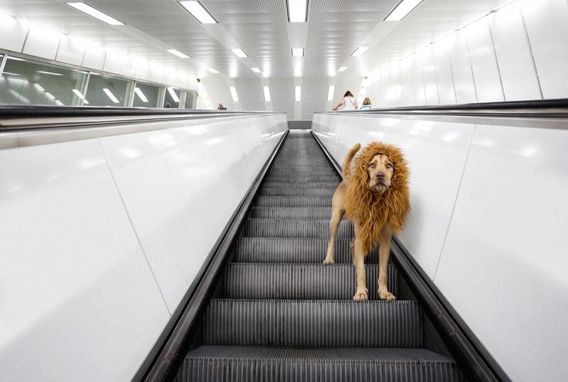 Big City Dog