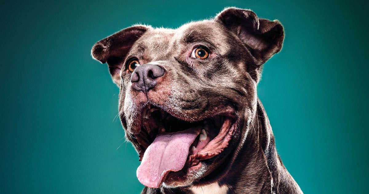 Why Owning a Dog Adds Years to Your Life - Men's Journal