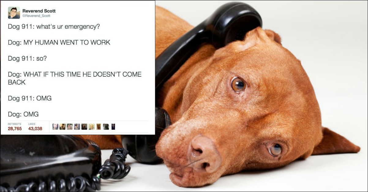 Dog 911 Tweets